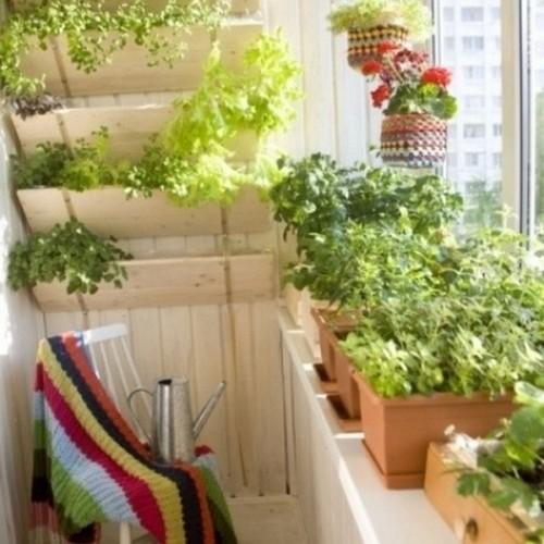 Пряности на балконе для любителей кулинарии.