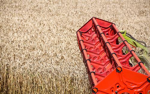 Русская пшеница угрожает американским фермерам