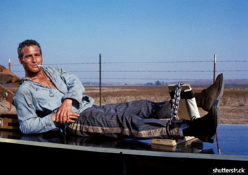 8 Iconic Movies from the New Hollywood Era, in Photos — Cool Hand Luke