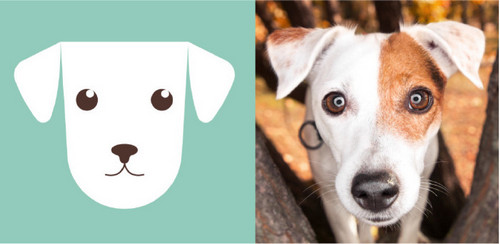 Create a Flat Vector Illustration of Your Pets in Illustrator — Draw Accents and Details