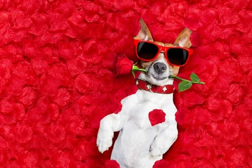 20 Trendy Valentine's Day Design Ideas to Inspire You — Pet Lovers