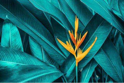 5 Popular Shutterstock API Calls - Get Image Details