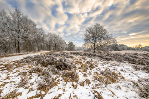 Professional Tips for Magical Winter Landscape Photos — Give Room for Editing