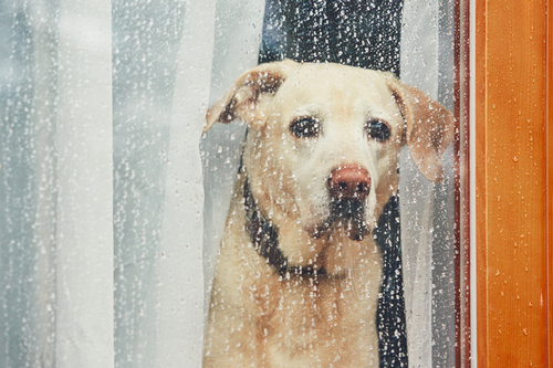 7 Photographers on Taking Beautiful Photos on Rainy Days — Improvise
