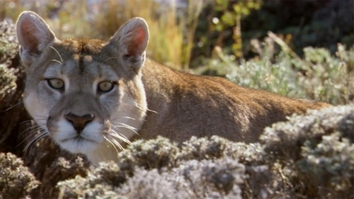 Chile's Great Conservation Leap Forward