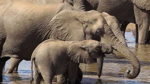 Near-total ban on trade in wild elephants for zoos